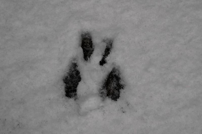 snow_o1_2018_005.jpg