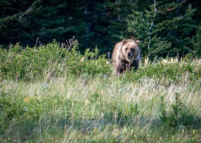 07_Glacier National Park - Montana