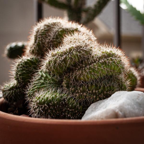 cactus 050320-2965.jpg