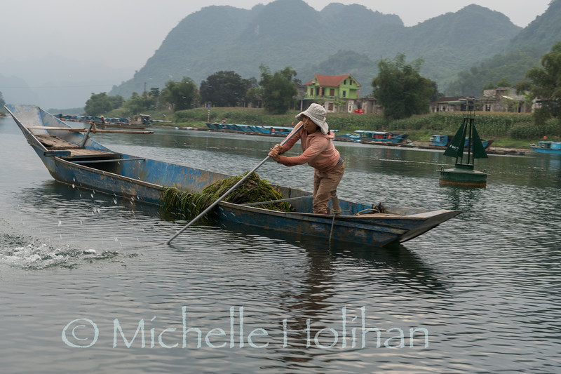 Harvesting river seaweed on the Song Con River, Phong Nha, Vietnam
