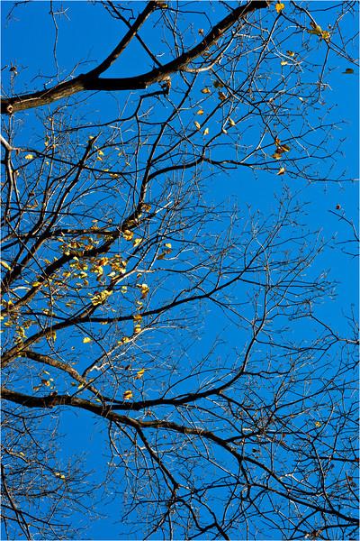 20111112_Autumn_02.jpg