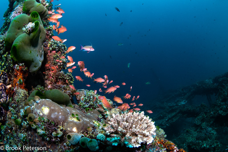 Thriving Artificial Reef