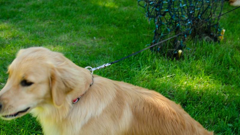 PuppyParty18-409.jpg