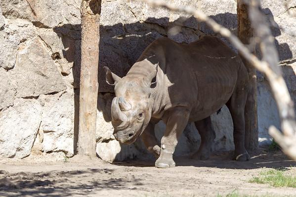 Cheyenne Mountain Zoo 2016