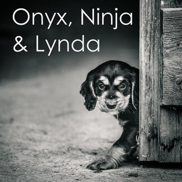 Lynda-Icons.jpg