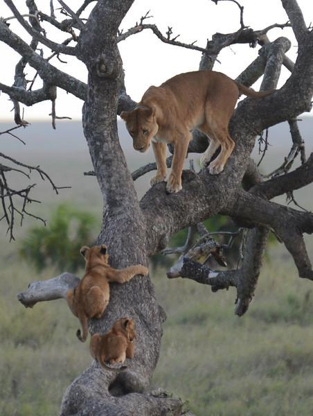 East Africa Safari 365.jpg