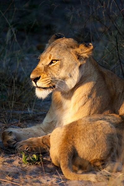 Botswana-34.jpg