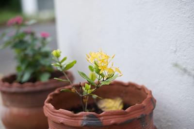 2020-09-06 - Akash's flower photography