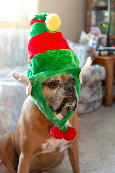 2018 Christmas-2539.jpg