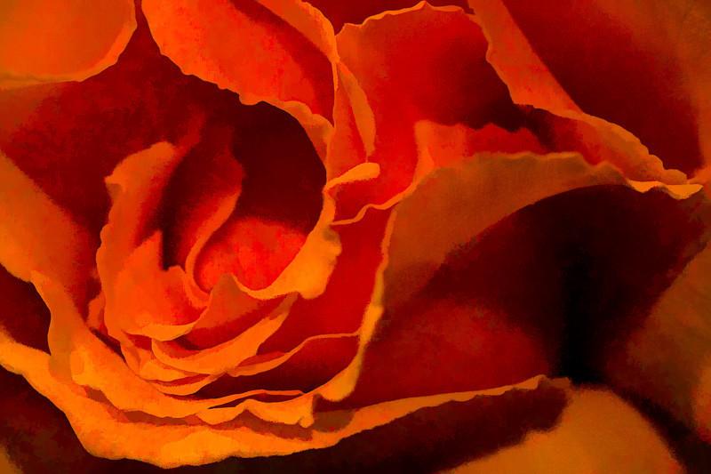 apr 21 - rose.jpg