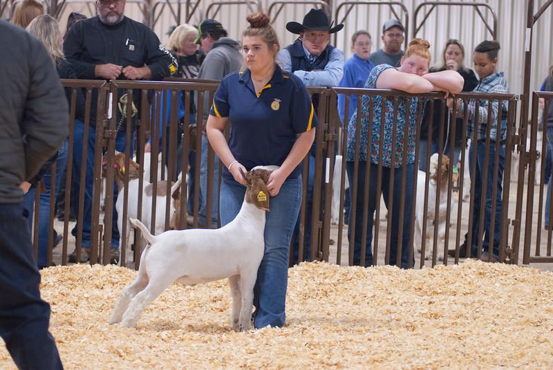 kay_county_showdown_goats_20191207-43.jpg