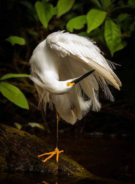 TORTUGUERO EGRET-22x30 for BAY PHOTO-FINAL.jpg