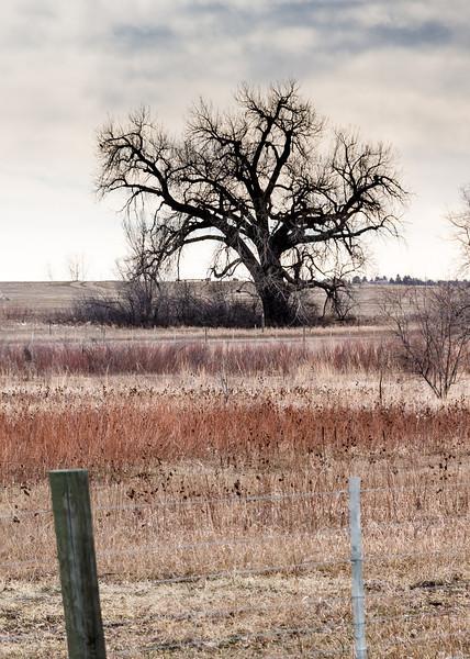 lonely winter oak