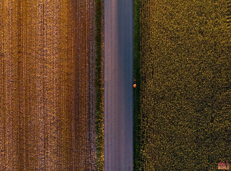 1541 - uasp - Amishtown Road Harvest Birdseye