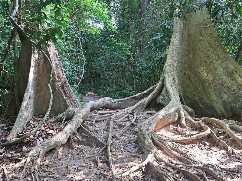 IMG_5265-mengkundur-tree.jpg