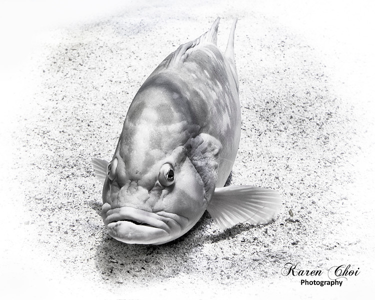 Black and white Fish sm.jpg