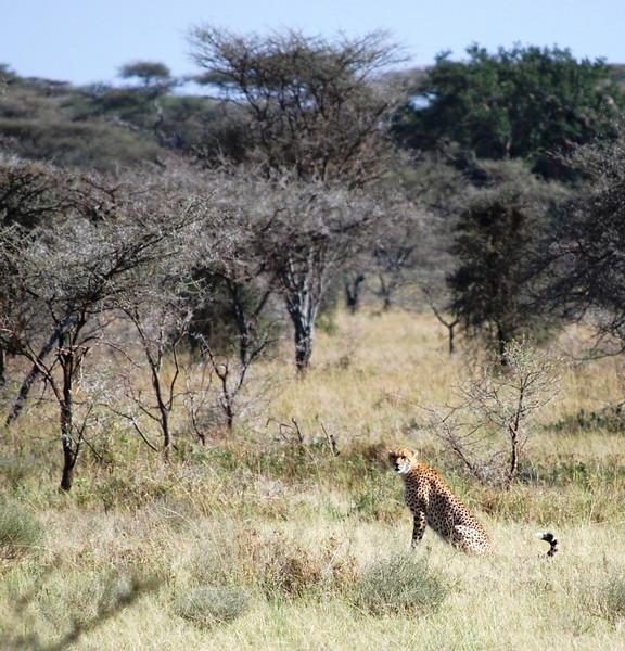 Serengeti (138).JPG