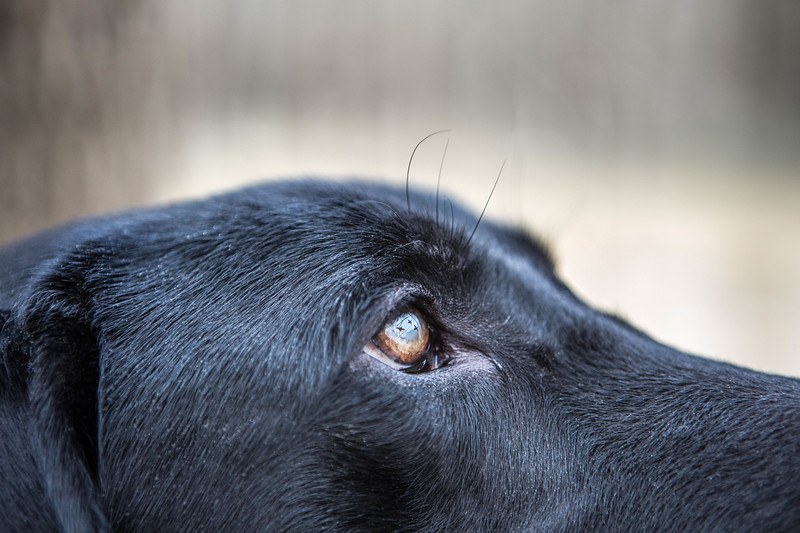 Close up of Mo's eyes hunting in the Arkansas timber