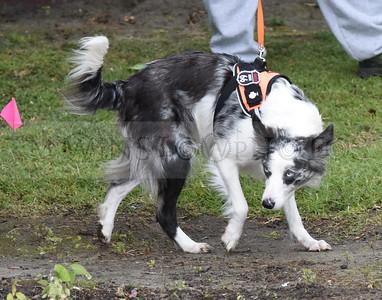 3-3-18 Dog 18