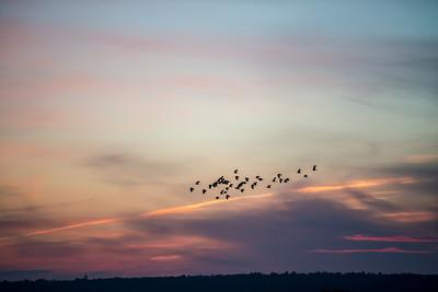Snettisham Nature Reserve - Norfolk