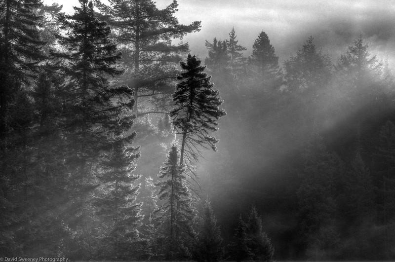 Morning Mist Light Dance.jpg