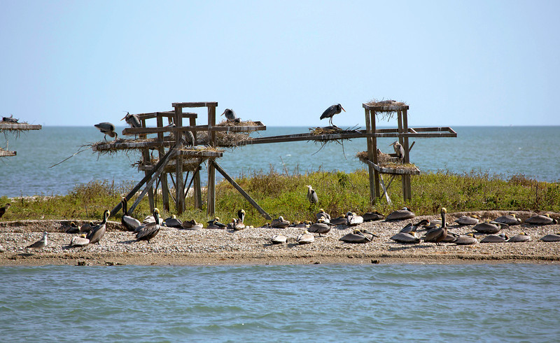 Another great blue heron rookery.  Notice the caracara entering on the far left.