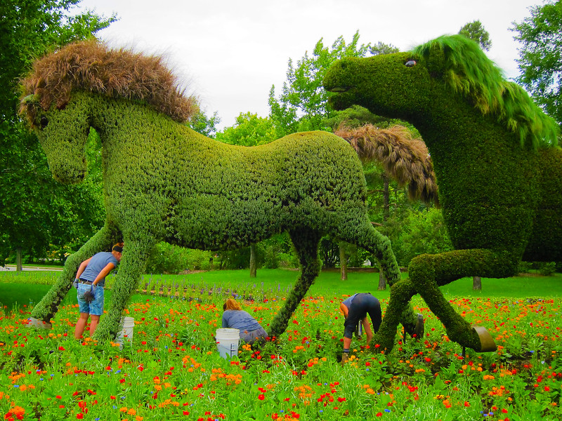 The Man Who Planted Trees - Horses Galloping