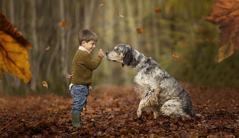 english-setter-dog-breeder-uk-Rebecca-Goutorbe-scaled.jpeg