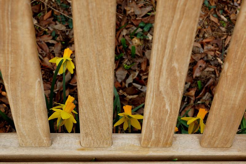 Sayen bench and flowers.jpg