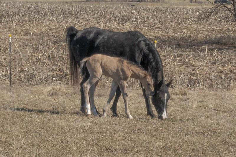 foal-3.jpg