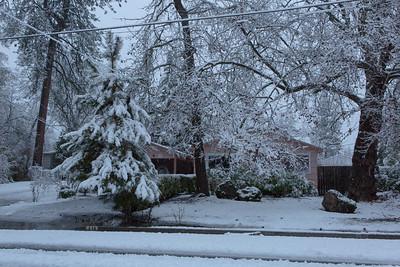 Oregon garden in snow