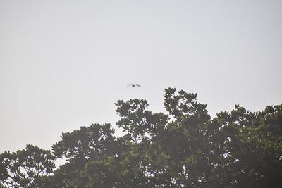 Sunset Bird Rookery Kayak Tour - Navon, Hintz, Malooly & Woodworth