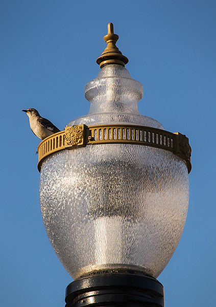 Bird on Lamp by Todd Mathieson.jpg