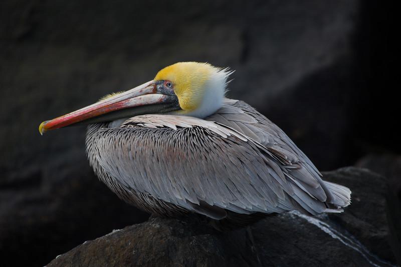 19-Sept North America Birds-3824.JPG