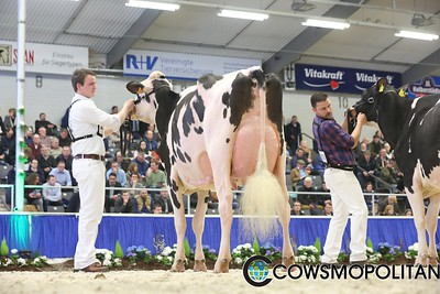 Intermediate Holstein