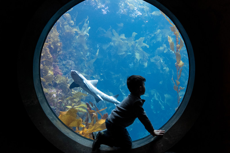 pacific grove_Mar032019_6343.jpg