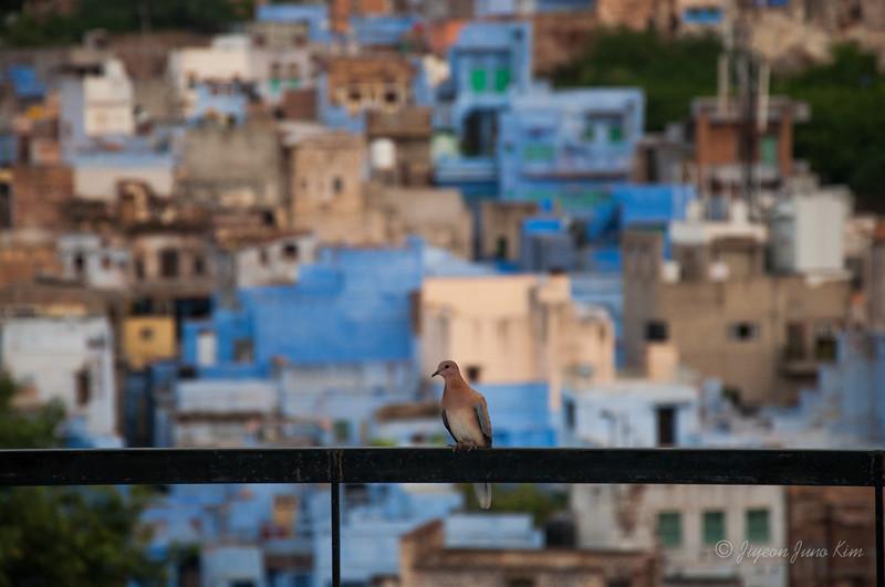 India-Rajasthan-Jodhpur-0099.jpg