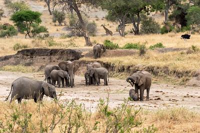 Tanzania 2017 Elephant