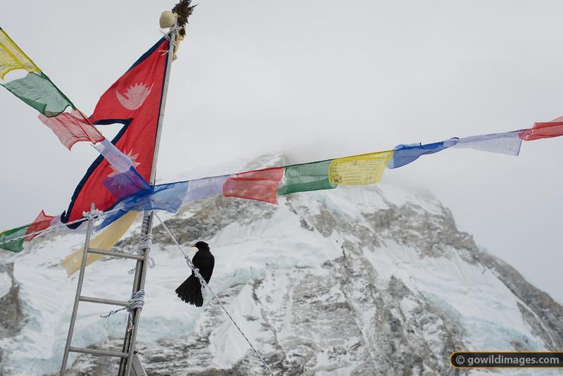 Nepal flag adorns a ladder at the Icefall Doctors' chorten at base camp