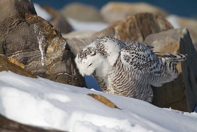 Snowy Casting Pellet