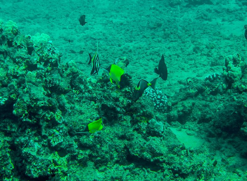 Hawaii diving - 052-2.jpg