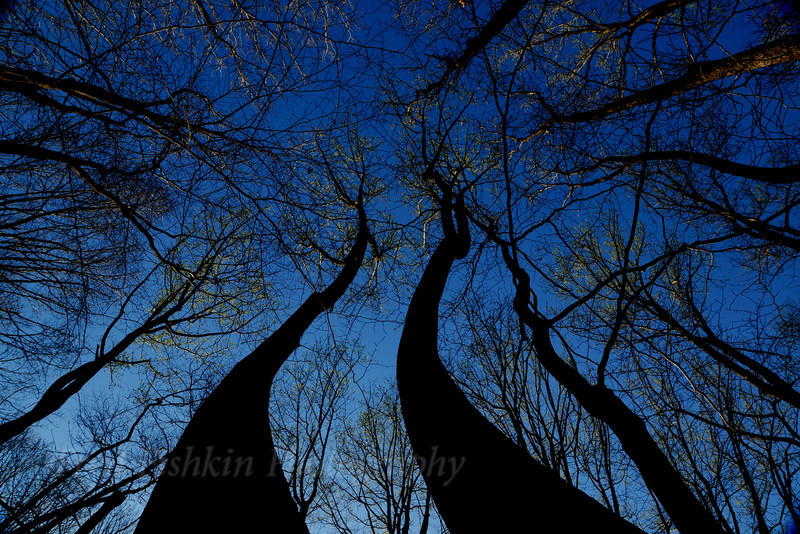 Clayton trees.jpg