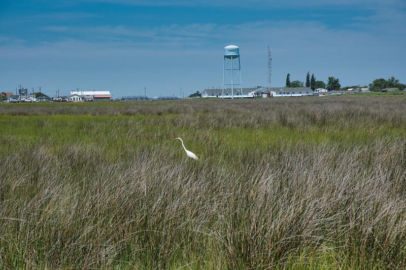 Marsh and Crane