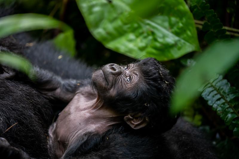 Uganda_T_Gor-1600.jpg