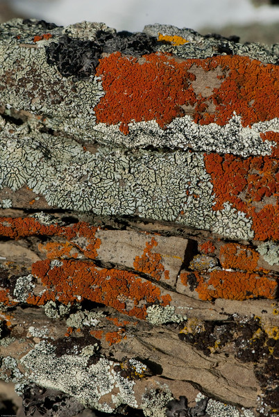 Bozeman Lichens-19.jpg