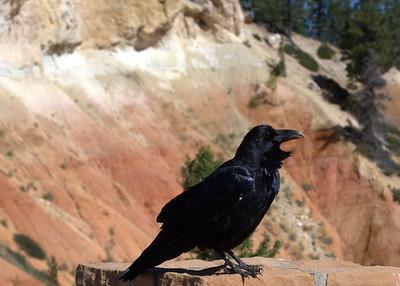 Bryce Canyon 2014