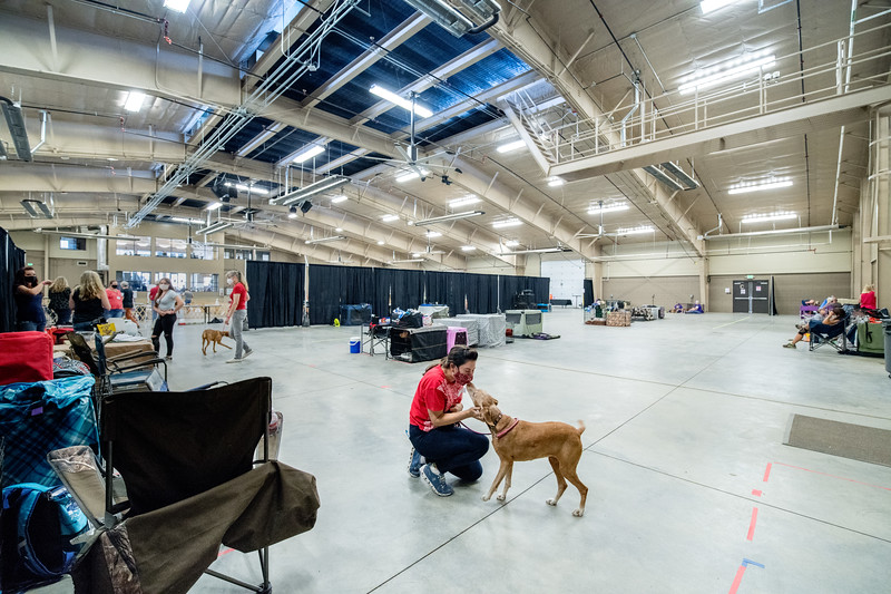 Dog Show - Estes Park Events Complex