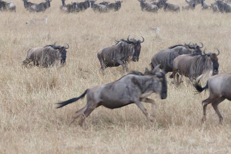 Kenya 2015-07498.jpg