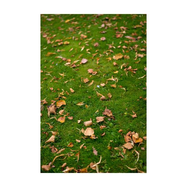 269_Autumn_10x10.jpg