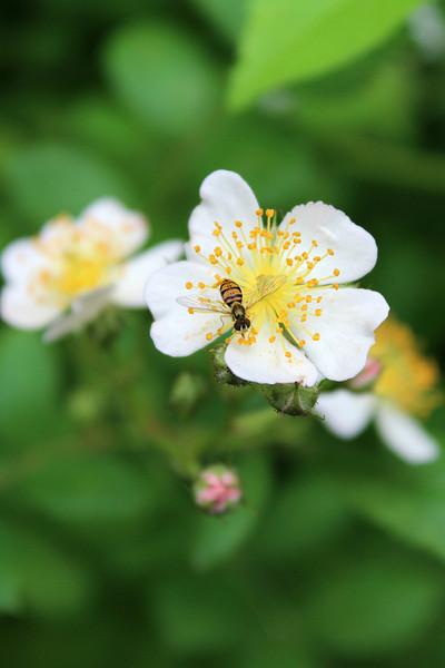 """Busy bee, happy Monday!"" - Daily Photo - 06/17/13"